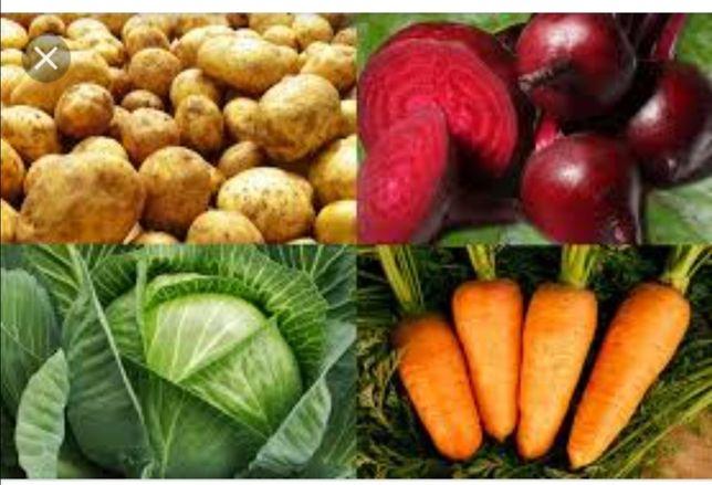 Продам овочі картопля морква буряк