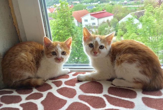 Руді котенята в добрі руки