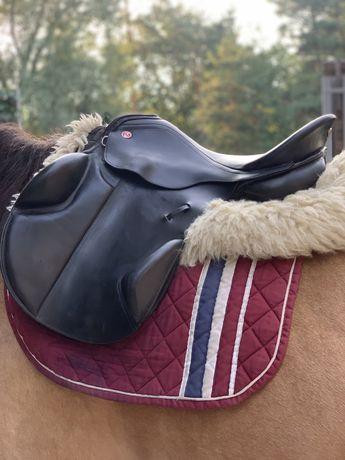 Конь кобыла лошадь седло пони жеребец