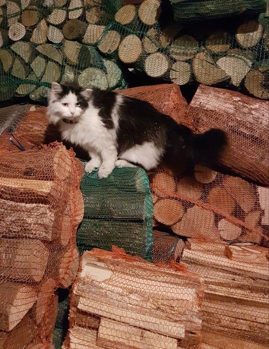 Drewno kominkowe i rozpałkowe Sulęcinek - image 1