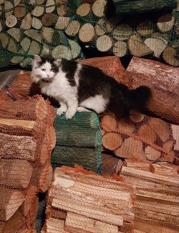 Drewno kominkowe i rozpałkowe