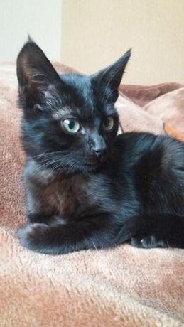 Черный котенок. Ласковый мальчик 2 месяца