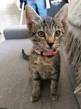 Malutka koteczka Soja szuka dobrego domu