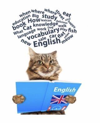 Перевод текстов и решение заданий по английском языке любой сложности