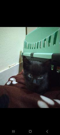 Gato abandonado, entre 3 a 6 meses
