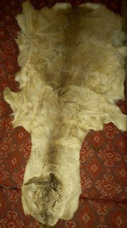 Шкура молодого оленя, с Урала