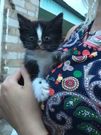 Кошка, котенок девочка  в хорошие руки