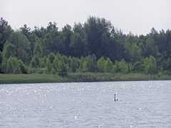 dzialka nad jeziorem w Bronkowie (lubuskie) 40 km od Zielonej Gory