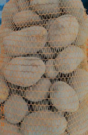 Ziemniaki SORAYA ładne duże smaczne 1 zł/kg