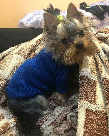 свитер одежда  для йорка, мопса, таксы