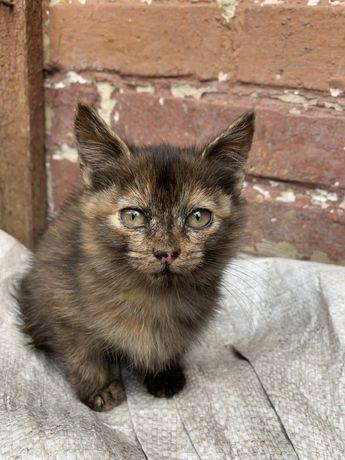 Кошенятко з оригінальним носиком кошеня