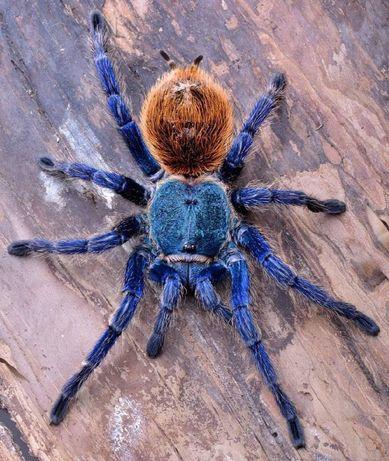 Пауки птицееды и скорпионы для новичков и опытных с кормом и жилищем
