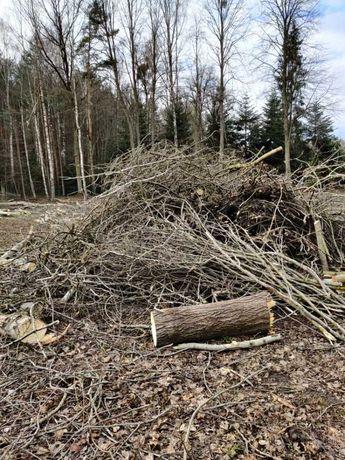 Oddam za darmo dużą ilość gałęzi drzew liściastych.
