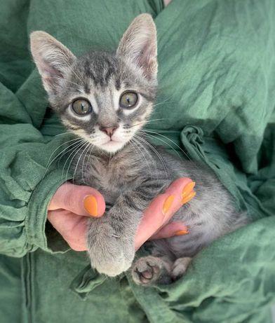 5 замечательных ручных ласковых котят