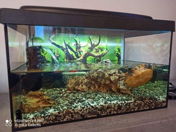 Akwarium dla żółwia wodno-lądowego: