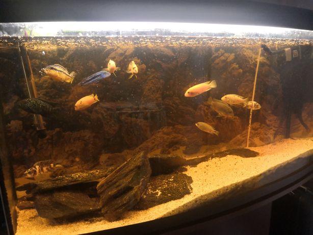 Akwarium z szafka i rybami