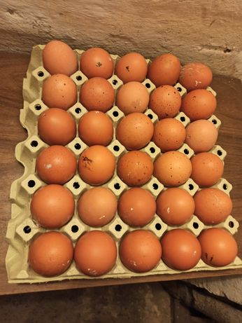 jajka wiejskie wolny wybieg z wielkopolski