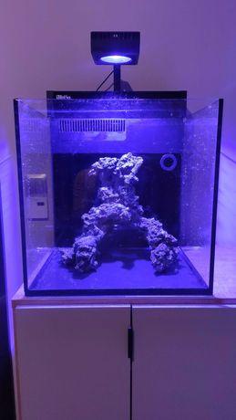 Red Sea Max Nano akwarium morskiej 75 litrów