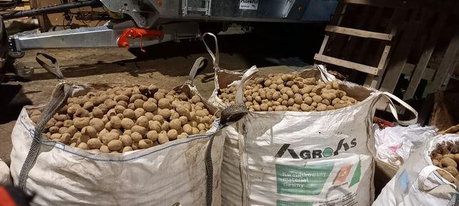 Ziemniaki Vineta ekologiczne sadzeniaki
