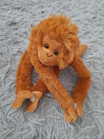 Interaktywna małpka.