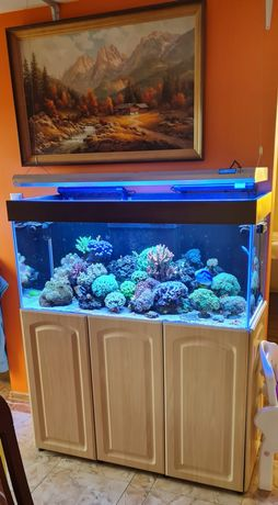 Akwarium morskie 300 litrów wraz z całym życiem i wyposażeniem