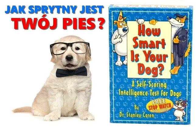 Trener dla psów + stoper elektroniczny - How Smart Is Your Dog?