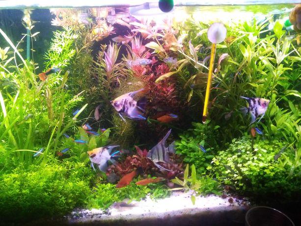 Roślinki akwariowe z przycinki