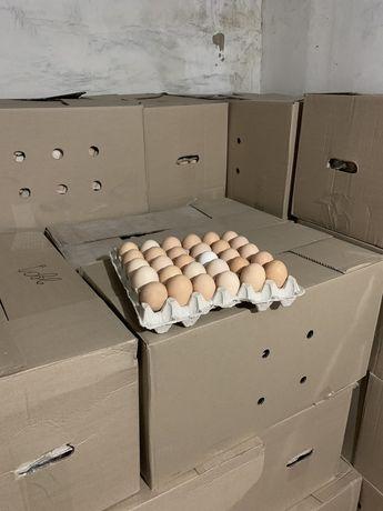 Яйца инкубационные бройлеров