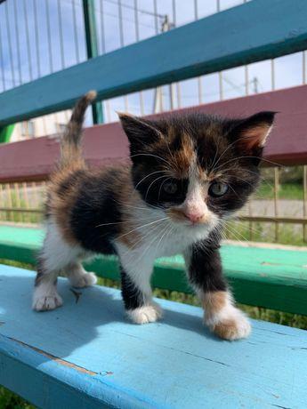 Котята ищут тёплый дом, котёнок