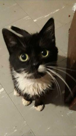roczny kotek szuka domu
