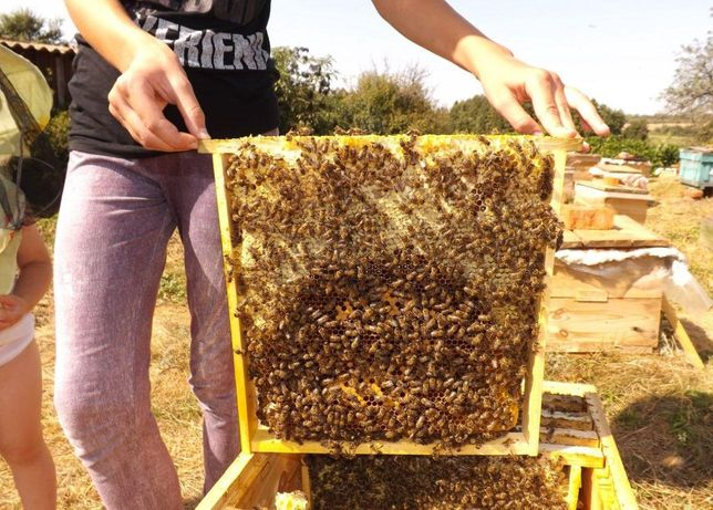 СARNICA От Mahа. С 26 мая. Продуктивные. Пчеломатки.