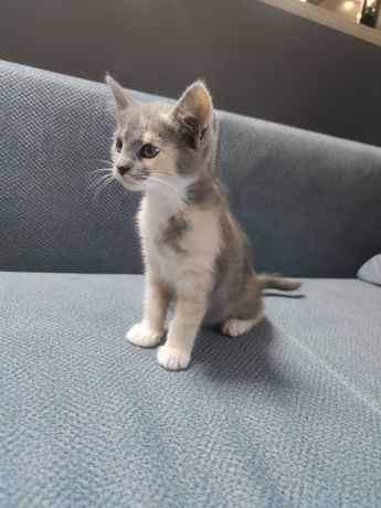 Трёхмастные кошки