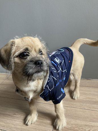 Kurtka dla małego psa z ociepleniem
