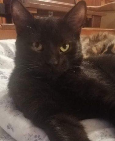 ЛЁЛИК- настоящий, сказочный кот- учёный