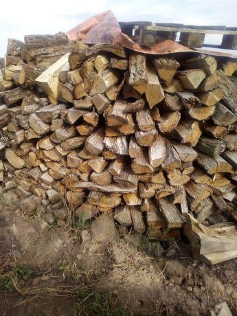 Drewno dąb