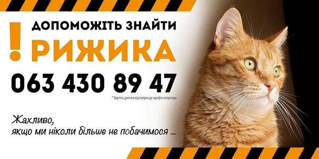 Пропал, потерялся рыжий кот! исчез! возможно вывезли кота! 26 апреля
