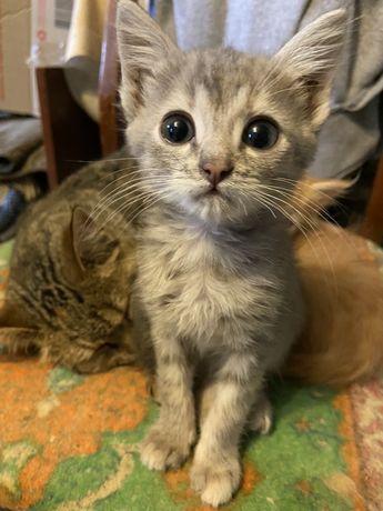 Отдам котиков в хорошие руки