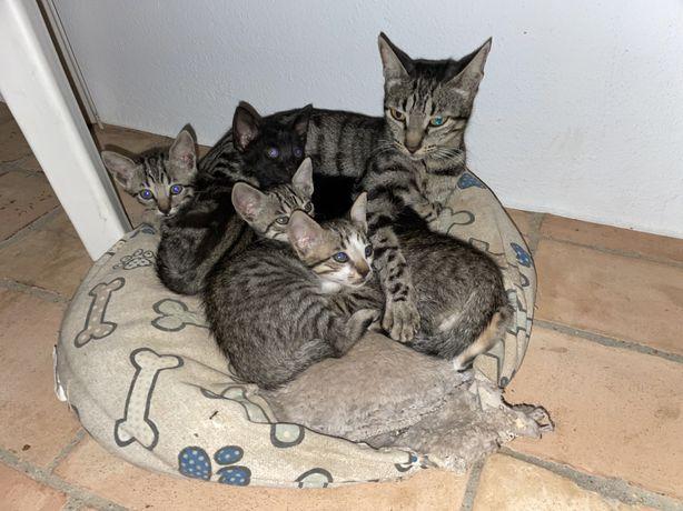 Dão-se gatinhos com cerca de 2 meses