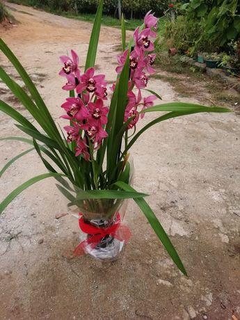 Orquideas para venda com flor