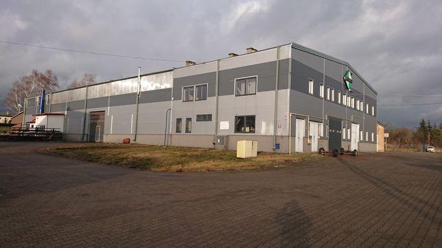 Wynajmę halę produkcyjno _ magazynową 2200 m2