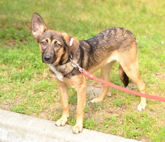 Зайка, молоденька активна собачка
