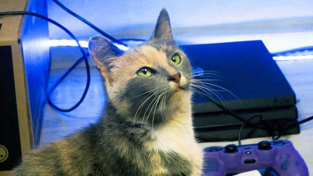 Красивая кошечка Алиса в поиске семьи! Кот, кошка, котята