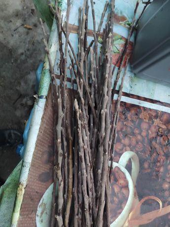 Черенки колоновидной яблони Есения