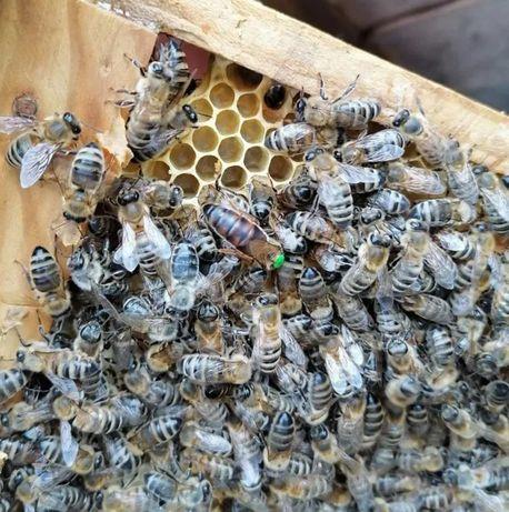 Под заказ. Карника Тройзек Бджолині матки. Дружба с соседями.