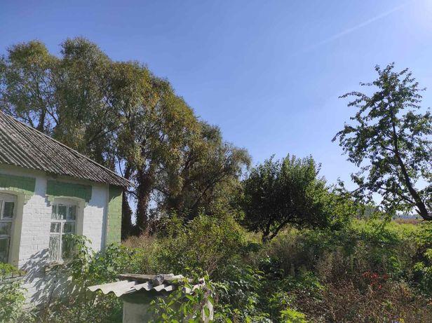 Продам дом с большим участком и огородом