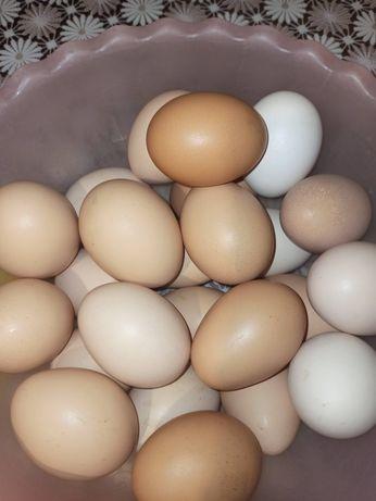 Яйця домашніх курочок