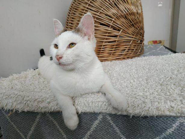 Spokojna i wdzięczna kotka szuka domu