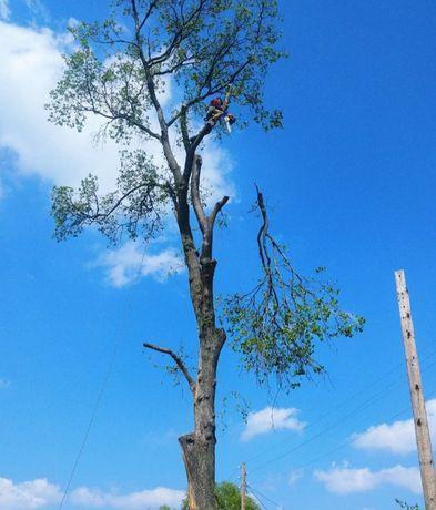 Спилить дерево. Обрезка сада. Спилим дерево любой сложности.