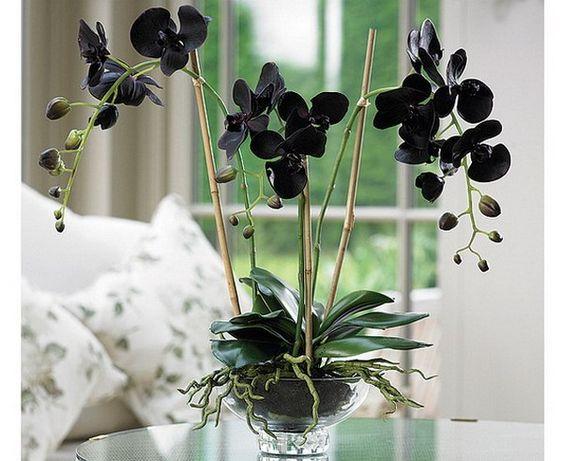 Орхидея (ваша) обмен на диффенбахию (мою)
