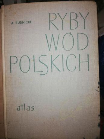 Ryby wód polskich A.Rudnicki